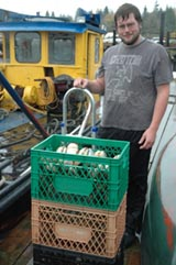 Geoduck harvesting near Hood Canal, Washington